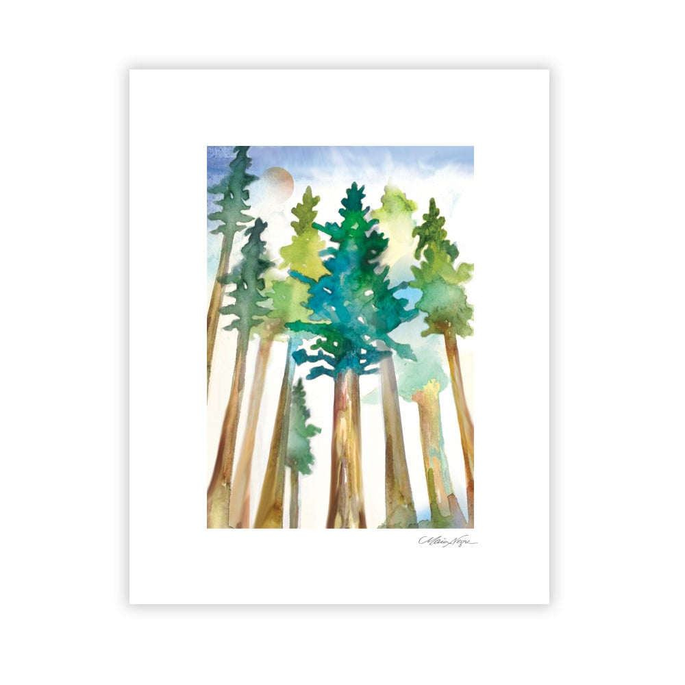 Image of Redwood Trees, Archival Paper Print