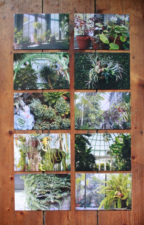 Image of Postcard set 'Botanical series'
