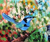 Image of Blue wren