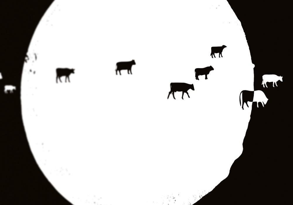 Image of Apocalypse Cow (2013)