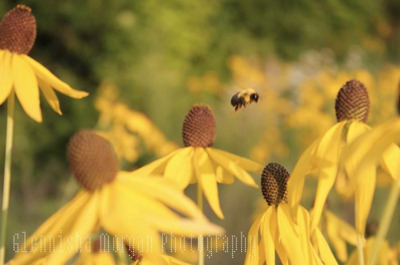 Image of Bee Purposeful