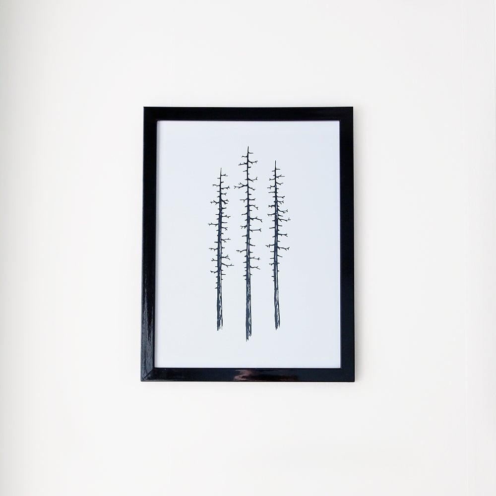 Image of Three lone pines