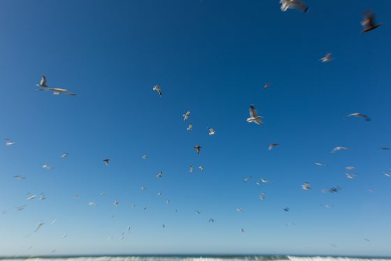 Image of Gulls