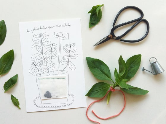 Image of Cartes : *Les herbes aromatiques*