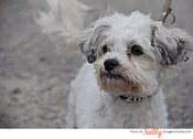 Image of PET PHOTOGRAPHY