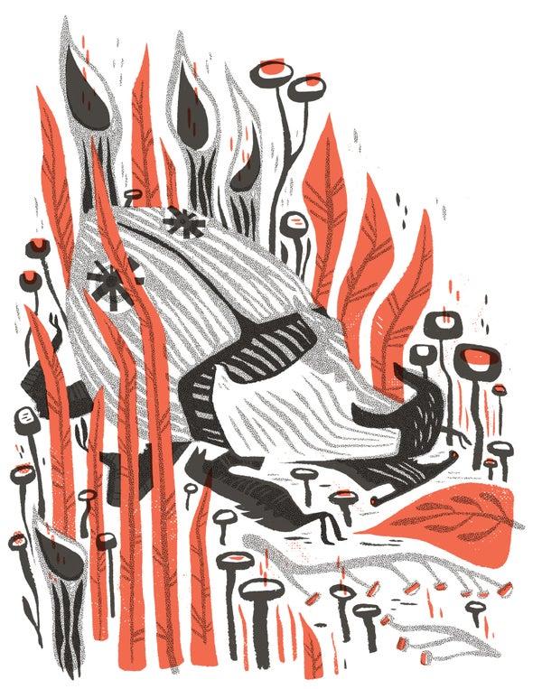 Image of Beetle Framed Print Pamela Wishow