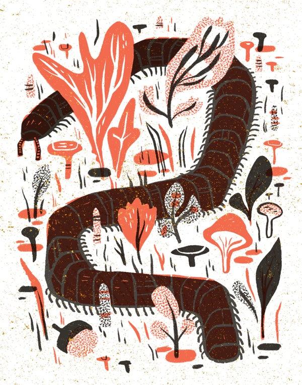 Image of Centipede Framed Print by Pamela Wishbow