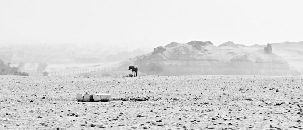 Image of The Lonely Horse