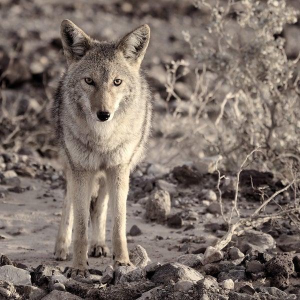 Image of True Wild