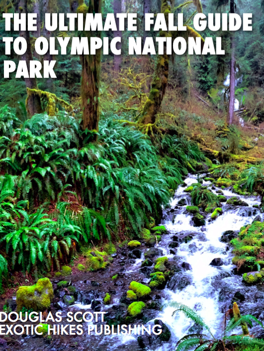 Image of The Ultimate Fall Guide to Olympic National Park