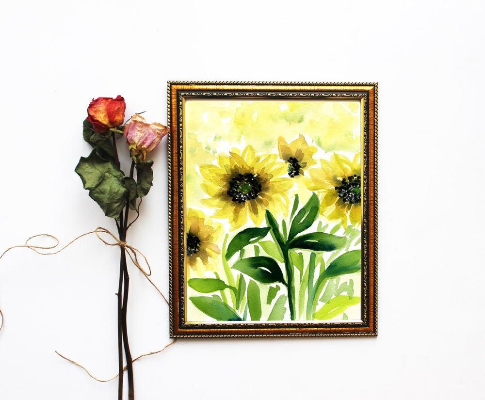 Image of Sunflower fields