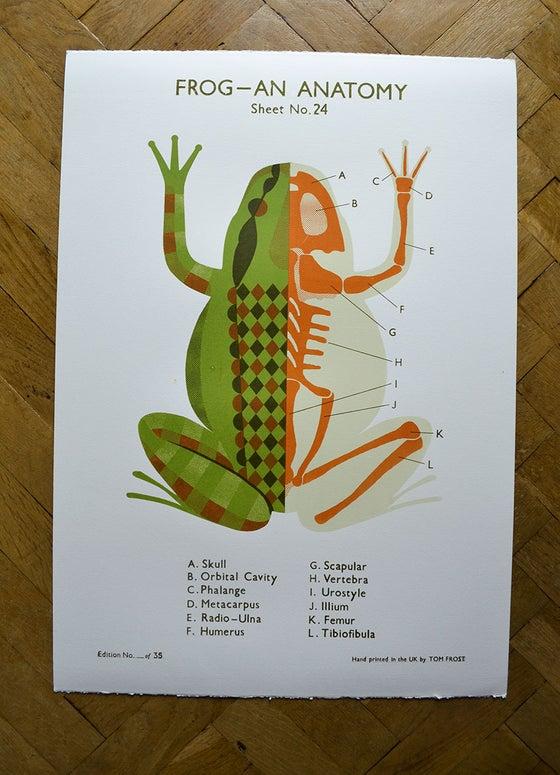 Image of Frog School Chart