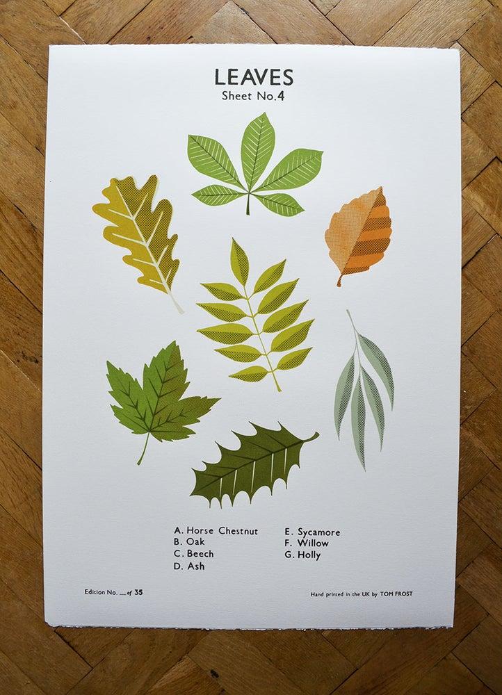 Image of Leaves School Chart