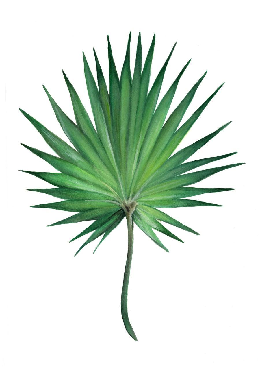 Image of Fan Palm