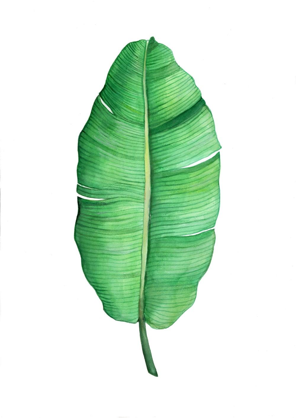Image of Banana Leaf