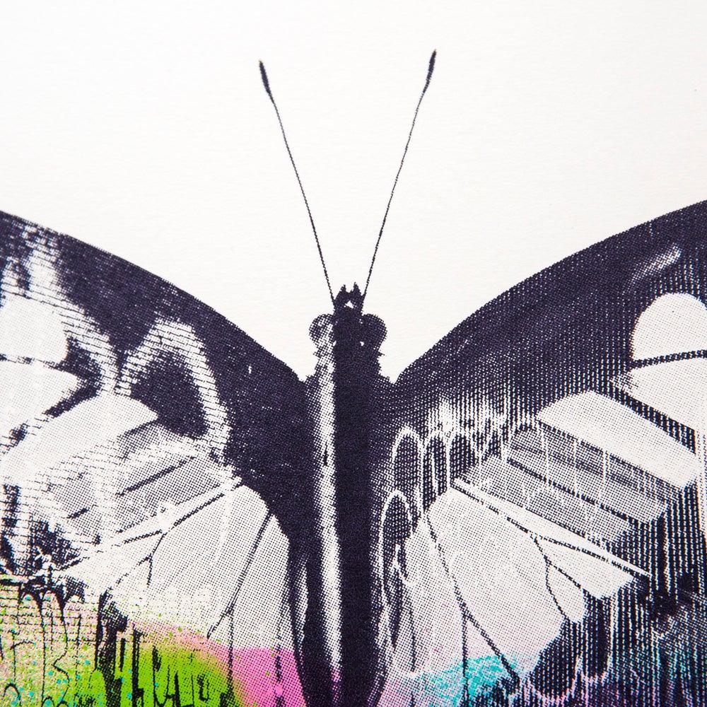 Image of Graffiti Butterfly