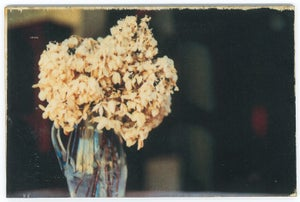 Image of Jess Repose's Slow Photography: Hydrangea