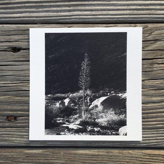 Image of Mt. Baldy