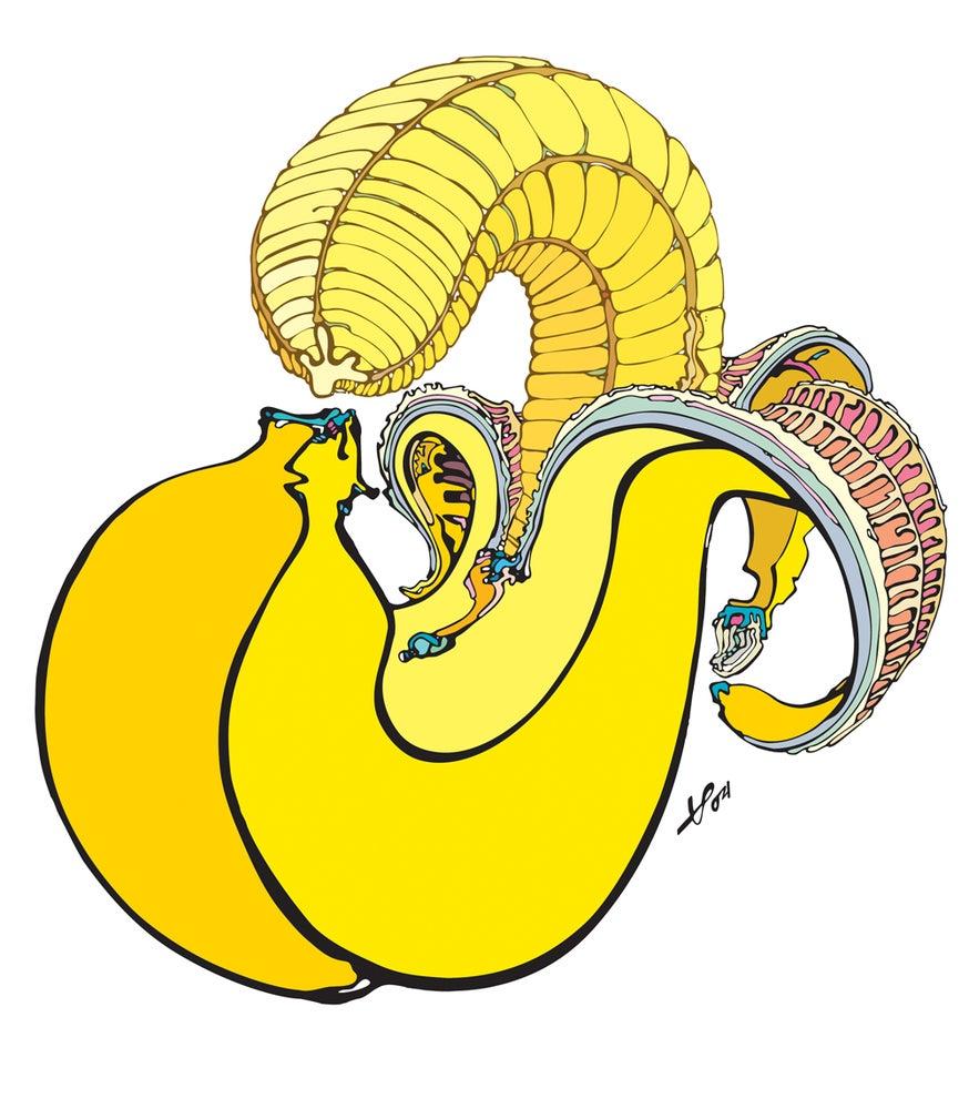 Image of Banan