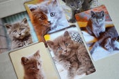 Image of NEW in the IBKC SHOP! Set of Six Gray Kitten Postcards