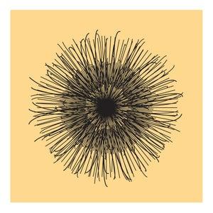Image of Flowerlines - Clematis vitalba