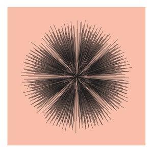 Image of Flowerlines - Sanguinaria canadensis