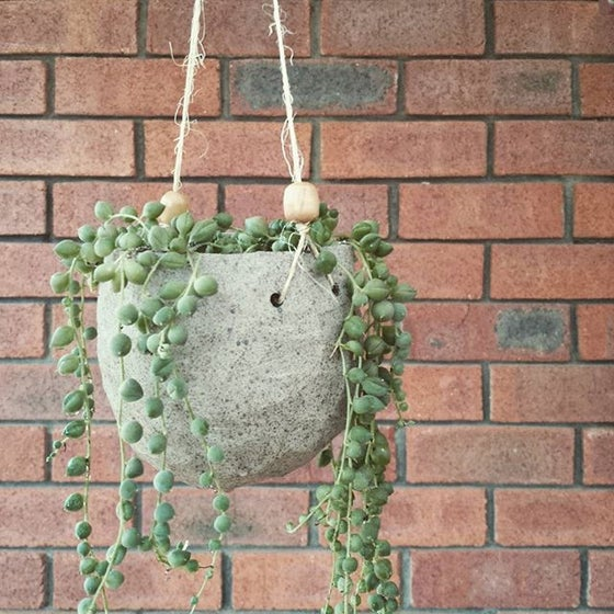 Image of Handmade Ceramic Planter + Plant