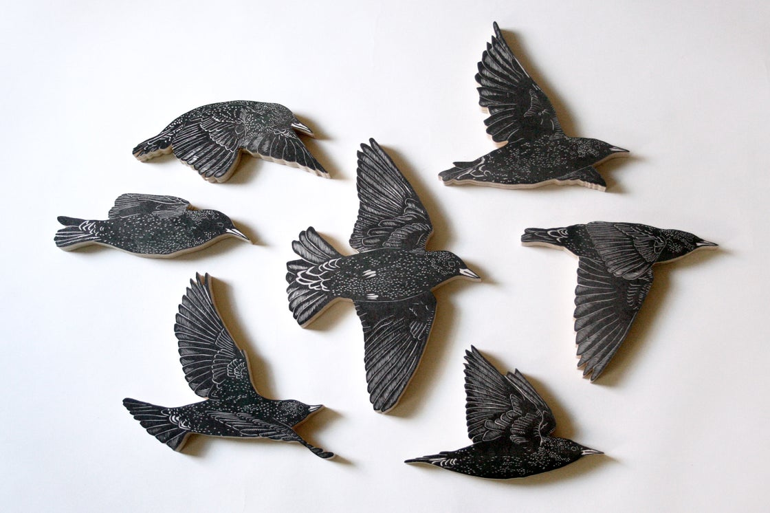Image of Set of 7 European Starlings