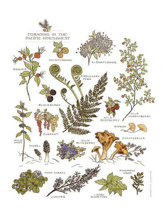 Image of Northwest Foraging Print