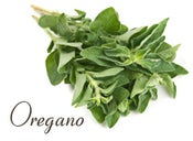 Image of Oregano White Balsamic Vinegar