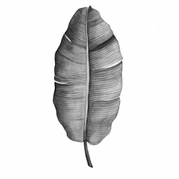 Image of Banana Leaf B&W