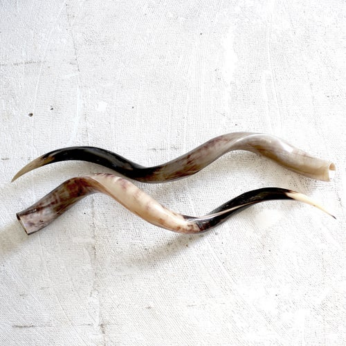 Image of Outer Kudu Horn