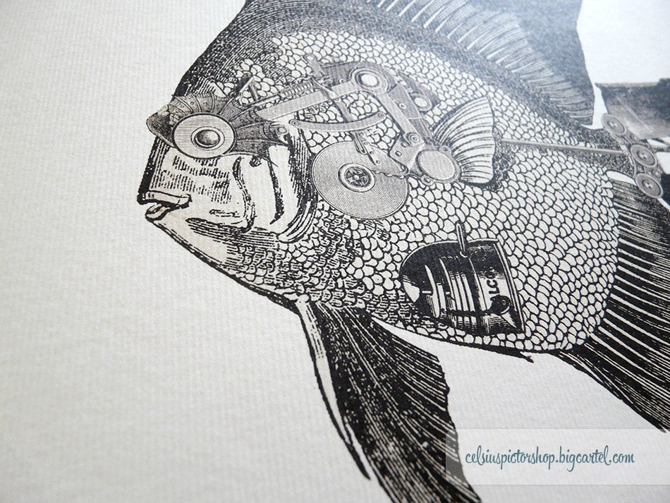 Image of Sailfish