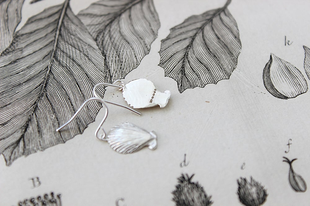 Image of Scallop shell earrings