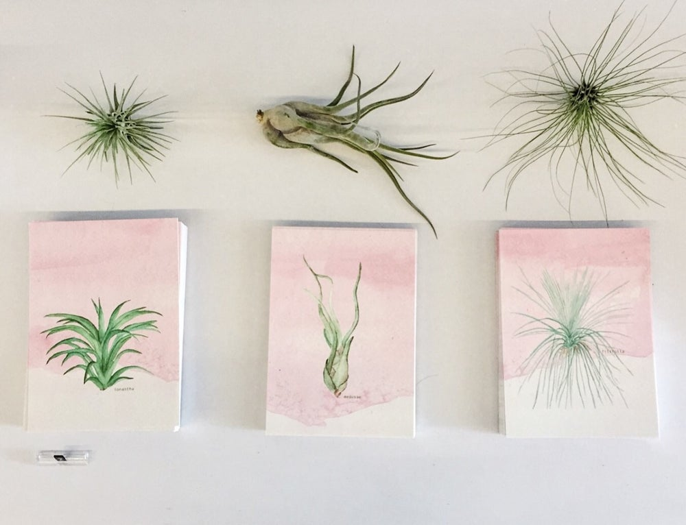 Image of Postcard aquarel Phytplants