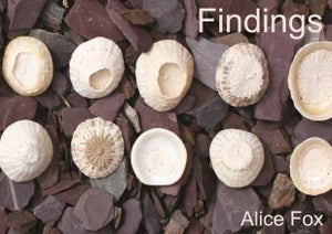 Image of Findings