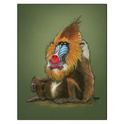 "Image of ""Mandrill"" Print"