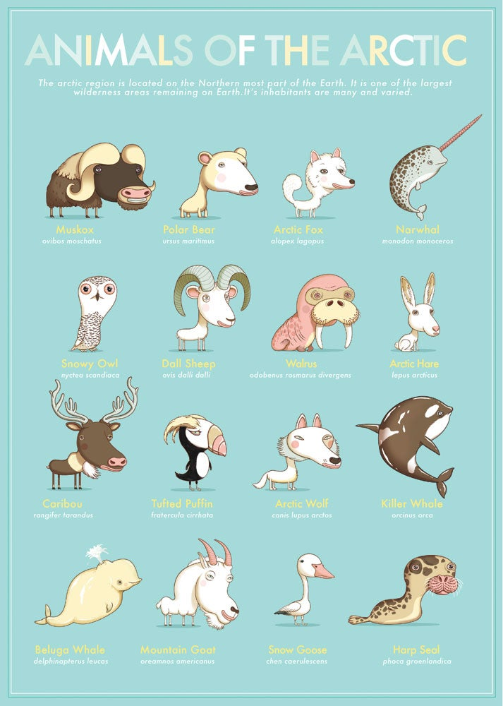Image of Animals Of The Arctic Circle