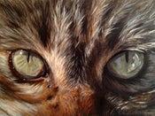 Image of Green Eyes - Framed Original Painting Cat Eyes
