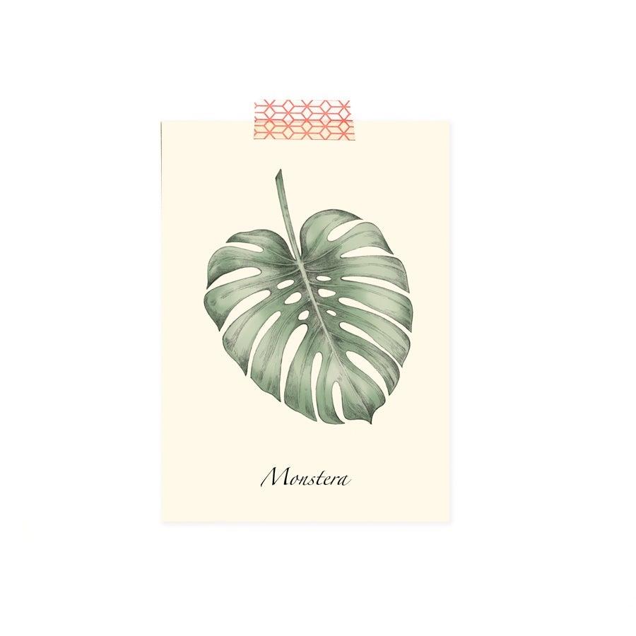 Image of Carte postale simple Monstera