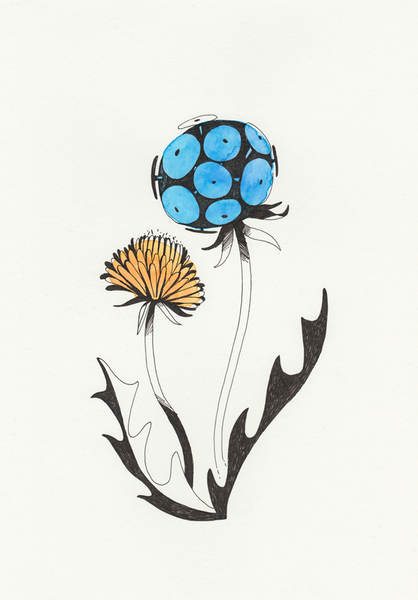 Image of Dandelion #2