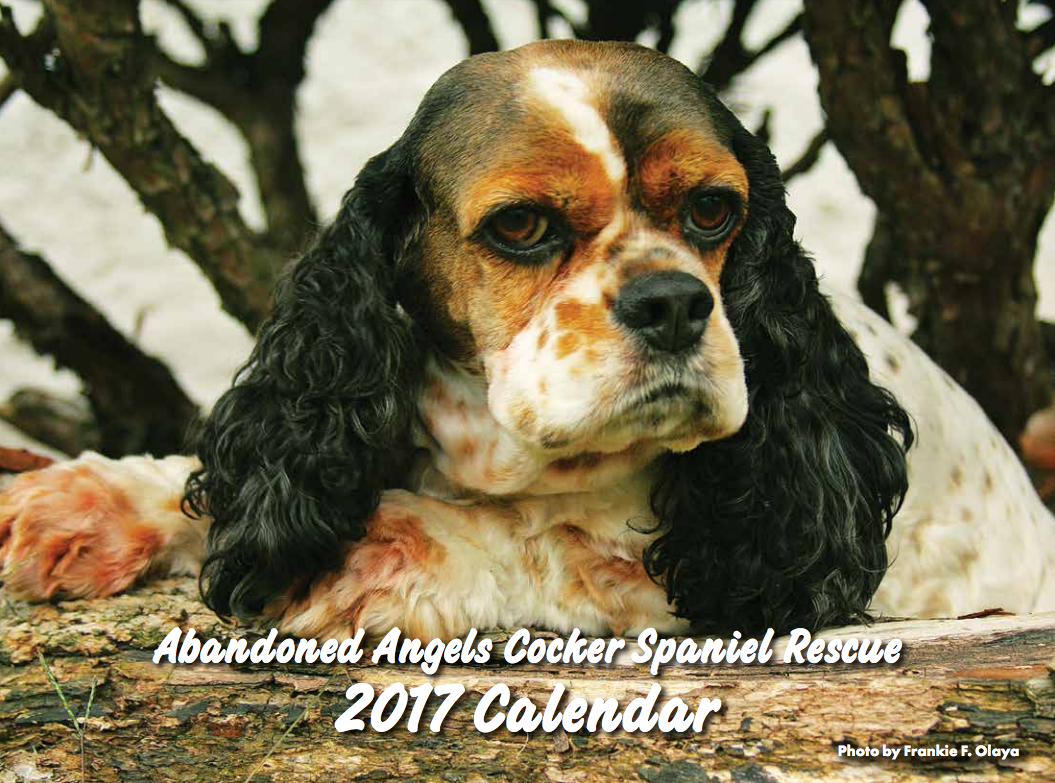 Image of 2017 Abandoned Angels Cocker Spaniel Rescue Calendar