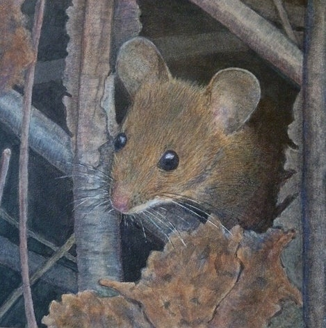 """Image of """"Wood Mouse"""""""