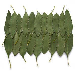 Image of Eucalyptus Double Row: Greens