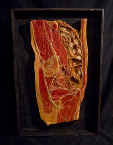 Image of SOLD: Antique Anatomical Wax Moulage #2
