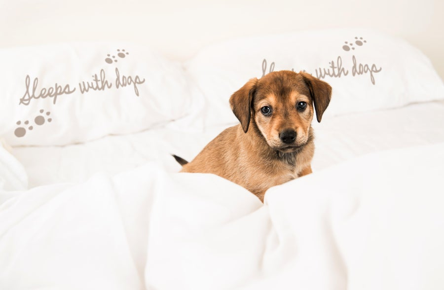 Image of SLEEPS WITH DOGS - Pillowcase by Faceplant Dreams