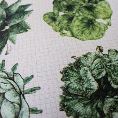 Image of Kodama - Seeds