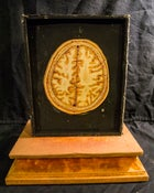 Image of SOLD: Antique Wax Moulage - Brain Cross Section