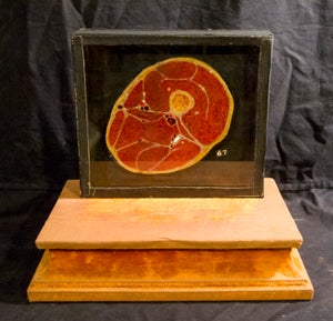 Image of SOLD: Antique Wax Moulage - Leg Cross Section