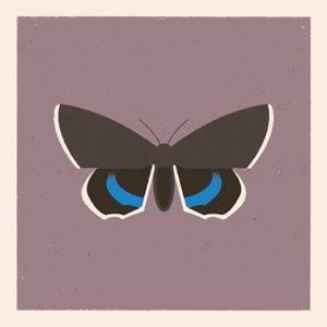 Image of Moth #4 (catocala fraxini)